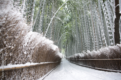 Keuken foto achterwand Kyoto 竹林の小径