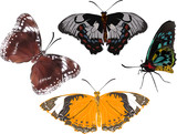 four color butterflies isolated on white