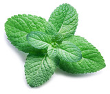 Spearmint or mint on white background. Top view. - 189344870