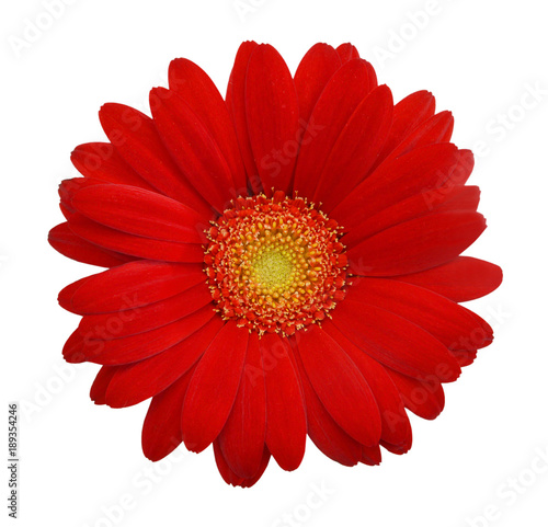 Aluminium Gerbera Red daisy on white background