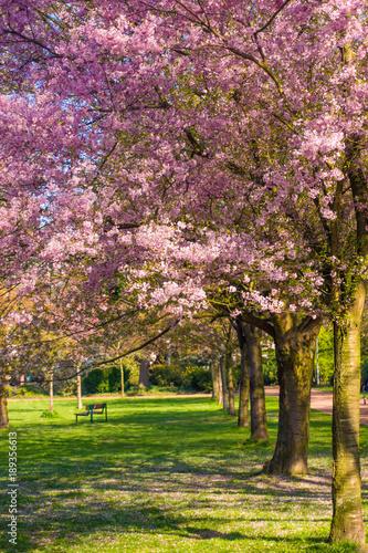 Beautiful park garden in spring. spring landscape