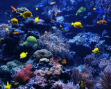 tropical Fish on a coral reef. Underwater coral fish