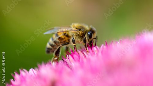 Sticker Biene