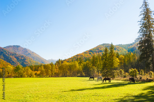 Foto op Plexiglas Herfst Horses on the green field in Austrian Alps.