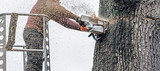 Tree surgeon in platform cutting thick tree trunk with chainsaw. - 189363090