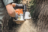 Man with chainsaw cutting large tree trunk. - 189363093