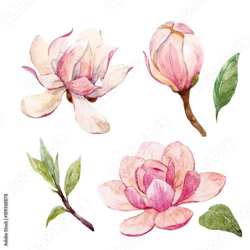 Fototapeta Watercolor magnolia floral composition
