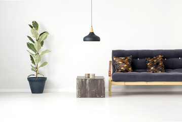 Ficus tree in living room