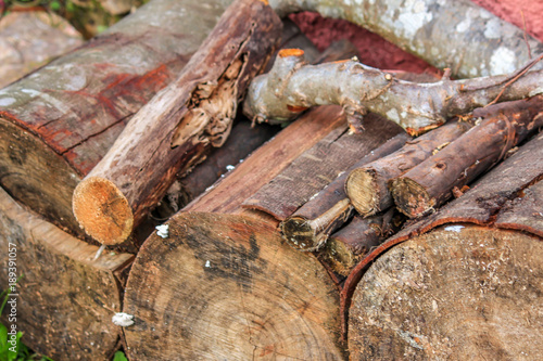 Foto op Canvas Brandhout textuur Vimieiro, Penacova, Coimbra, Portugal