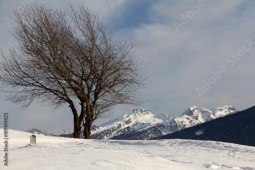 Fotobehang Kersen ciliegi spogli e cime innevate del Lagorai; Val di Fiemme, Trentino