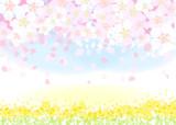 菜の花 桜 - 189429615