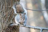 Cute Squirrel 3 - 189435600