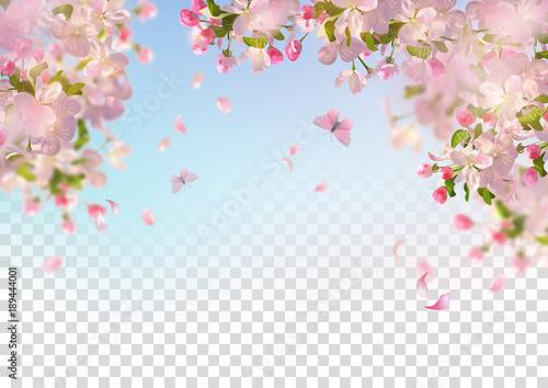 Spring Cherry Blossom - 189444001