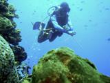 Excursión submarina.