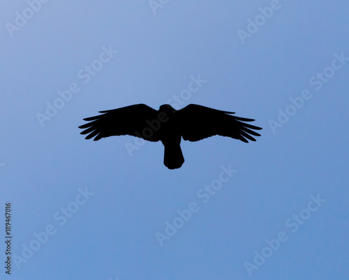 Silhouette of a black raven against a blue sky