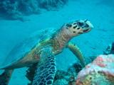 Meeresschildkröte - 189476480