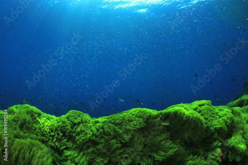 Green algae blue water underwater background