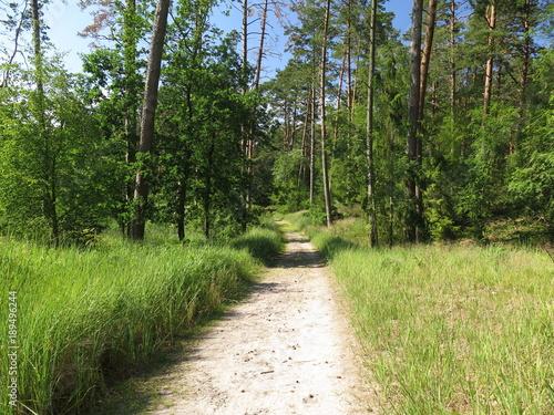 Plexiglas Weg in bos Kąty Rybackie - spacer po lesie