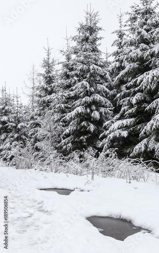 sniezne-jodly-w-lesie-monochromatyczny-vertical