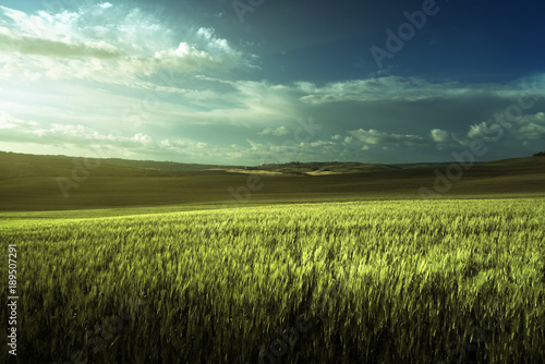 Fotobehang Lente Green field of wheat in Tuscany, Italy