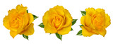 Fresh beautiful yellow rose isolated on white background with clipping path - 189515881