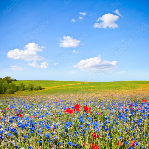Fotobehang Klaprozen France > Paysage, Campagne > Fleurs
