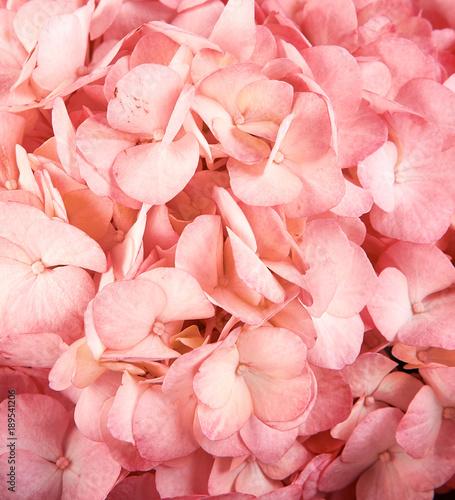 Aluminium Hydrangea Pink Hydrangeas (Hydrangea macrophylla)