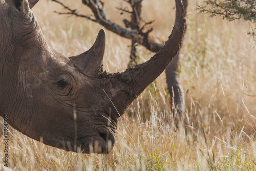 Aluminium Neushoorn Rhinoceros in Nature
