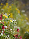 lot of beautiful flowers on a meadow  - 189549601