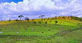 Renewable energy landscape. Wind mill turbines and cows graze on meadow - 189560094