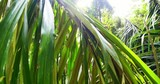Bright sun in green tropical forest. Foliage and exotic plants of rainforest flora at sunny day. Beautiful jungle nature background - 189560696