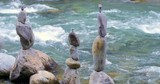 Stability and balance concept. Natural rocks arranged in buddhist pyramids and towers on mountain river bank. Fluid stream water flows with natural sound - 189563042