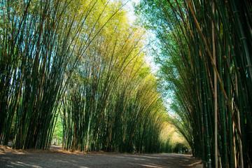 Bamboo plant nature background