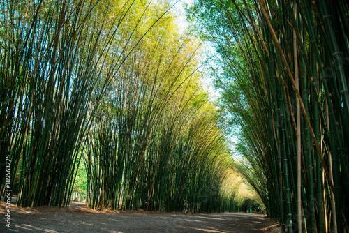 Fotobehang Bamboe Bamboo plant nature background