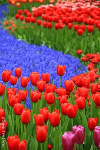 Fotobehang Rood Tulpen und Hyazinthen