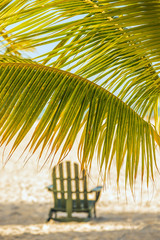 Chaise longue under the branches of a palm tree. sunny bright day at the beach.