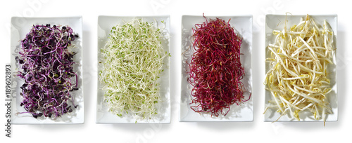 Papiers peints Légumes frais Germogli nel piatto