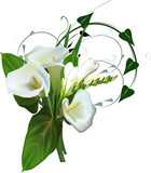 isolated white flowers bunch