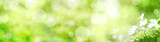 Fototapety Abstract green spring background