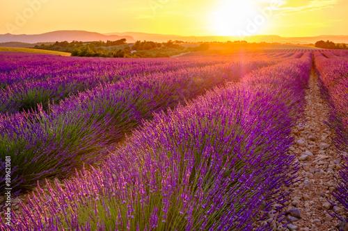 Foto op Canvas Lavendel Champ de lavande en été, coucher de soleil. Provence, Valensole, France.