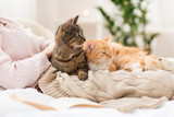 close up of owner with red and tabby cat in bed - 189639202
