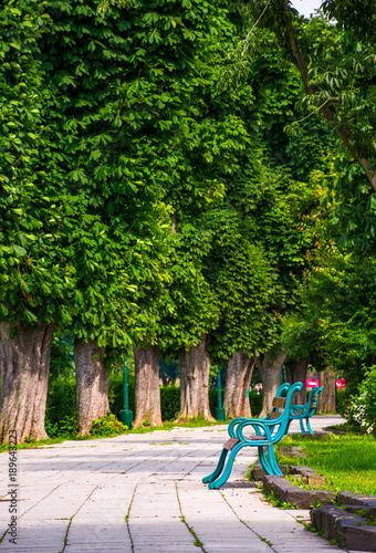 Fotobehang Kiev benches on Kiev embankment in Uzhgorod. lovely chestnut alley in summertime