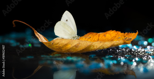 White butterfly on autumn leaf with colorful lights and bokeh on black background - 189652487
