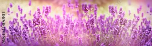 Aluminium Lavendel Selective focus on lavender flower, lavender flowers lit by sunlight in flower garden