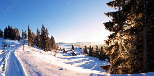 Snow-capped evergreen trees and snowy slopes