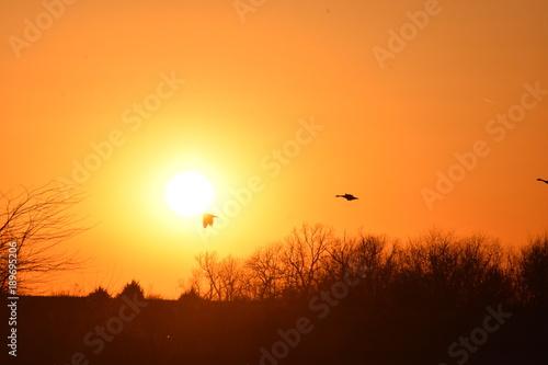 Foto op Aluminium Oranje eclat Flying Geese