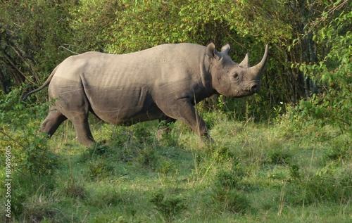 Aluminium Neushoorn black rhino 4