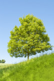 sunny single tree - 189712690