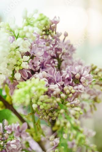 lilac flowers closeup