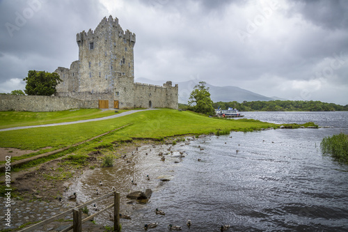 Fotobehang Schip Schilf am Lough Leane am Ross Castle, Co Kerry